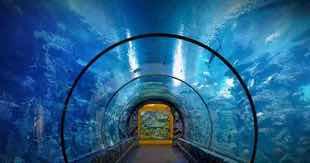 The Shark Reef